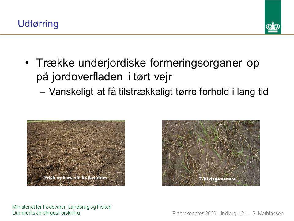 Udtørring Trække underjordiske formeringsorganer op på jordoverfladen i tørt vejr. Vanskeligt at få tilstrækkeligt tørre forhold i lang tid.
