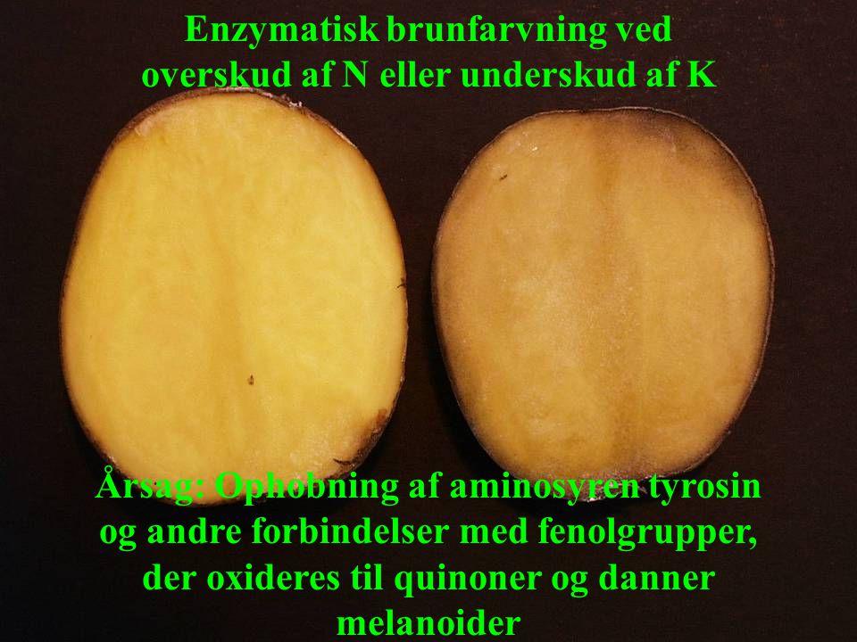 Enzymatisk brunfarvning ved overskud af N eller underskud af K