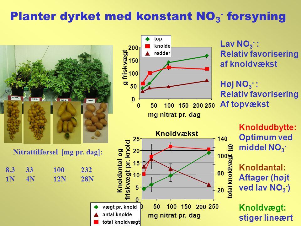 Planter dyrket med konstant NO3- forsyning