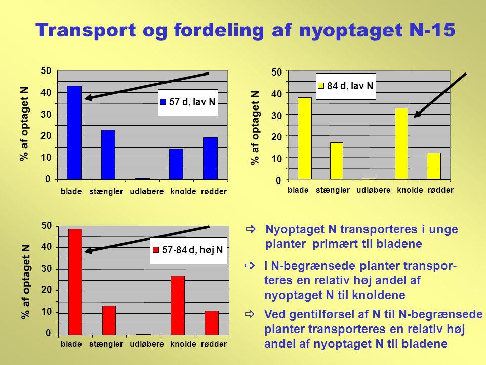 Transport og fordeling af nyoptaget N-15