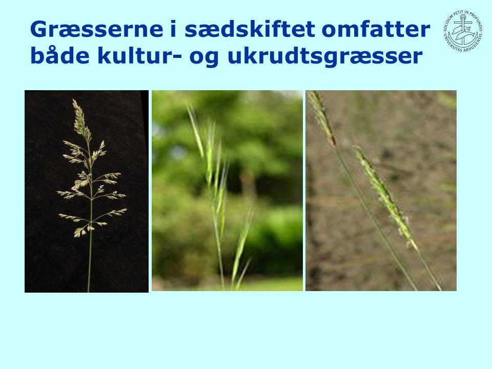 Græsserne i sædskiftet omfatter både kultur- og ukrudtsgræsser