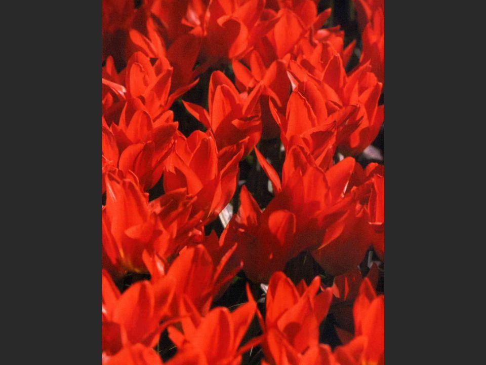 Røde blomster