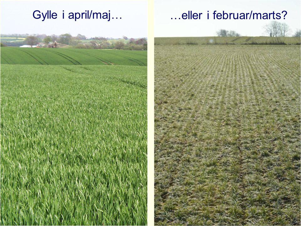 Gylle i april/maj… …eller i februar/marts