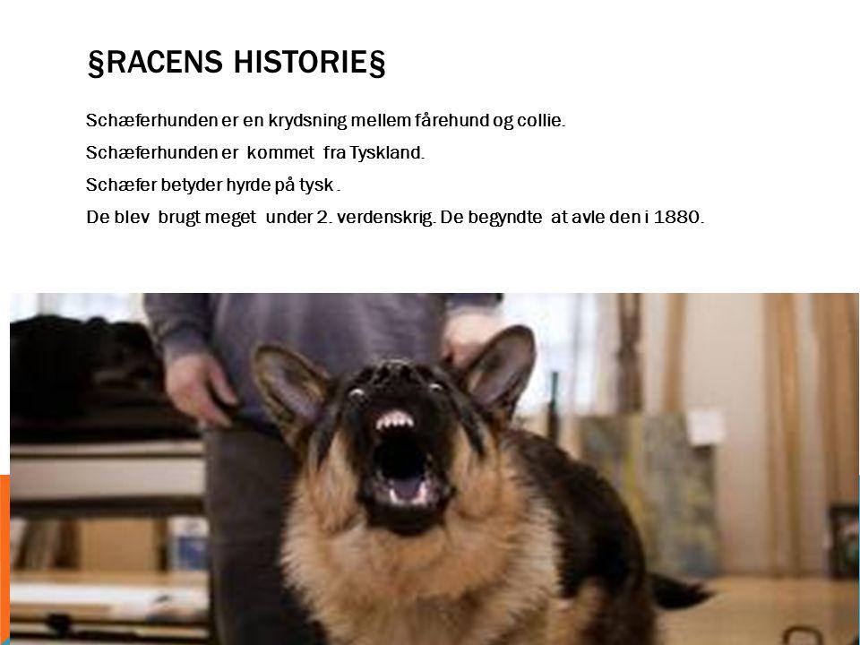 §Racens Historie§