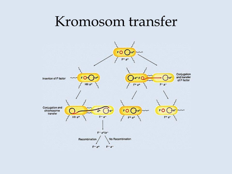 Kromosom transfer