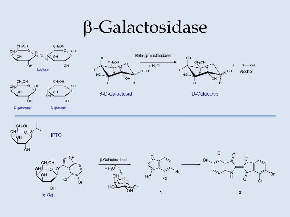 b-Galactosidase b-D-Galactosid D-Galactose IPTG X-Gal
