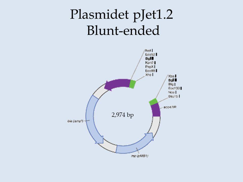 Plasmidet pJet1.2 Blunt-ended
