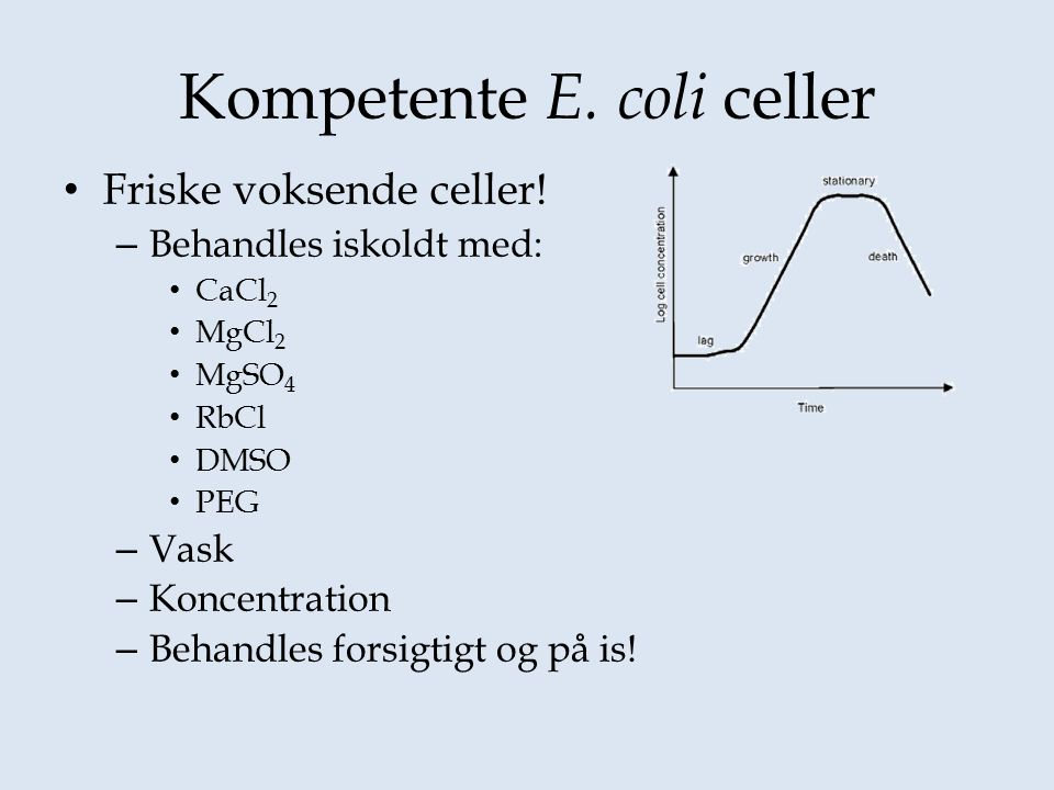 Kompetente E. coli celler