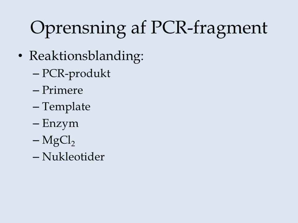 Oprensning af PCR-fragment