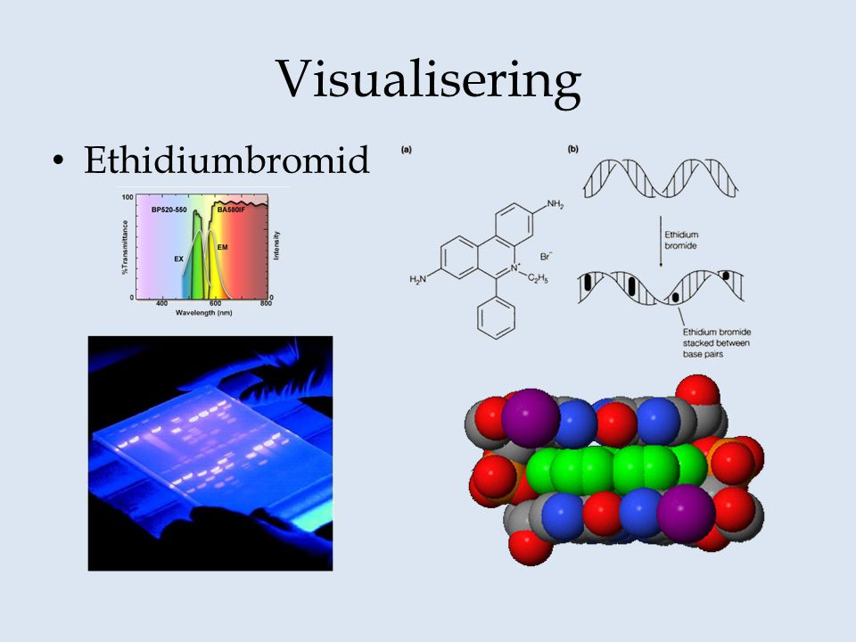 Visualisering Ethidiumbromid