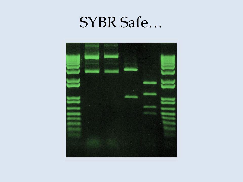 SYBR Safe…