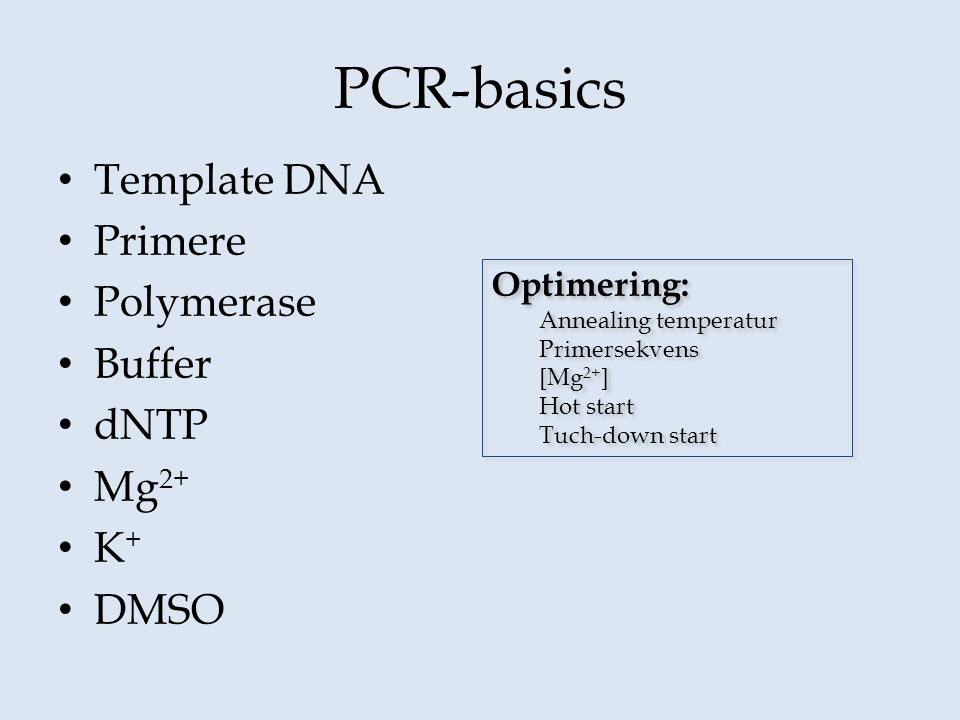 PCR-basics Template DNA Primere Polymerase Buffer dNTP Mg2+ K+ DMSO