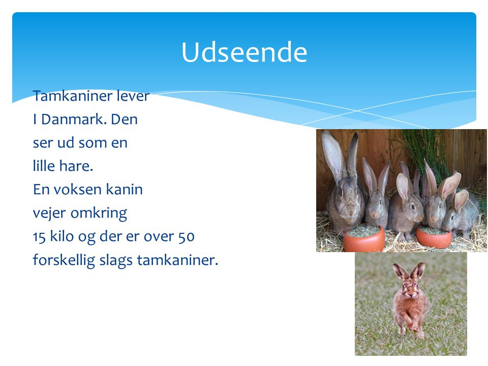 Udseende Tamkaniner lever I Danmark. Den ser ud som en lille hare.