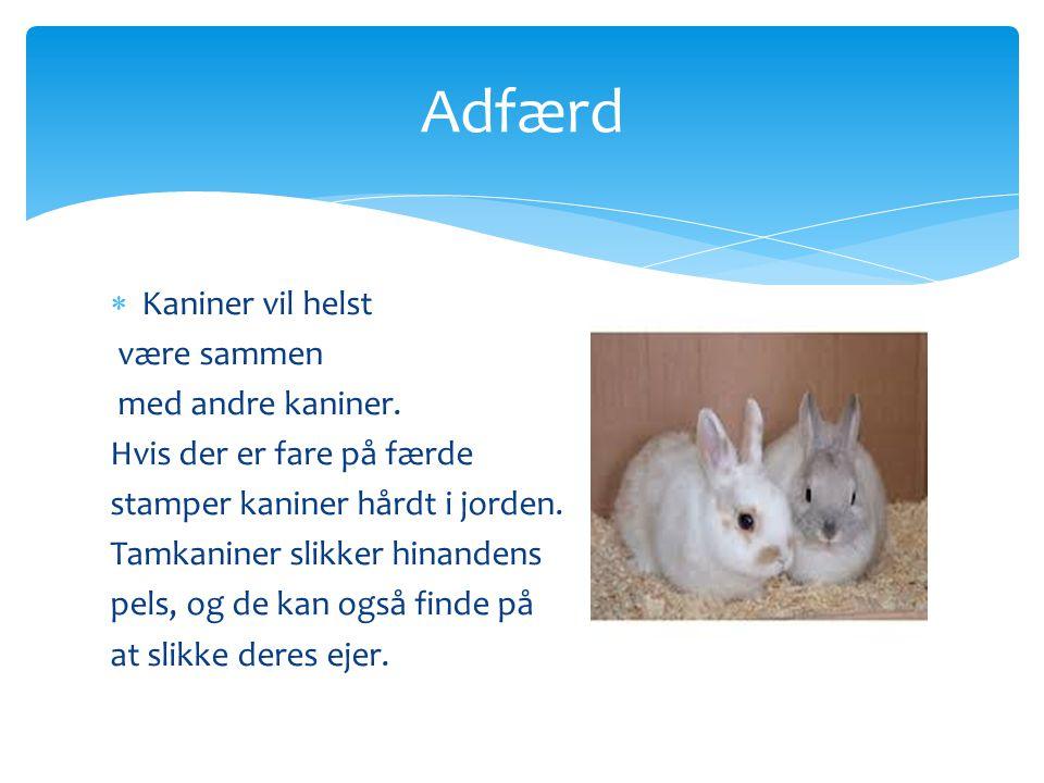 Adfærd Kaniner vil helst være sammen med andre kaniner.