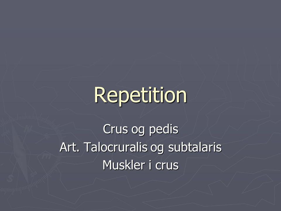 Crus og pedis Art. Talocruralis og subtalaris Muskler i crus