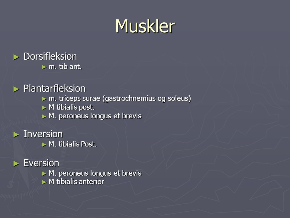 Muskler Dorsifleksion Plantarfleksion Inversion Eversion m. tib ant.
