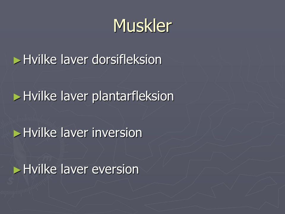Muskler Hvilke laver dorsifleksion Hvilke laver plantarfleksion