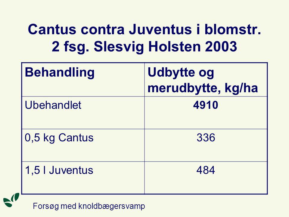 Cantus contra Juventus i blomstr. 2 fsg. Slesvig Holsten 2003