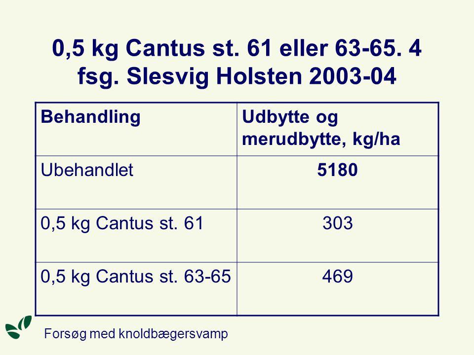 0,5 kg Cantus st. 61 eller 63-65. 4 fsg. Slesvig Holsten 2003-04