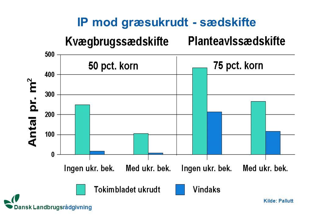 IP mod græsukrudt - sædskifte