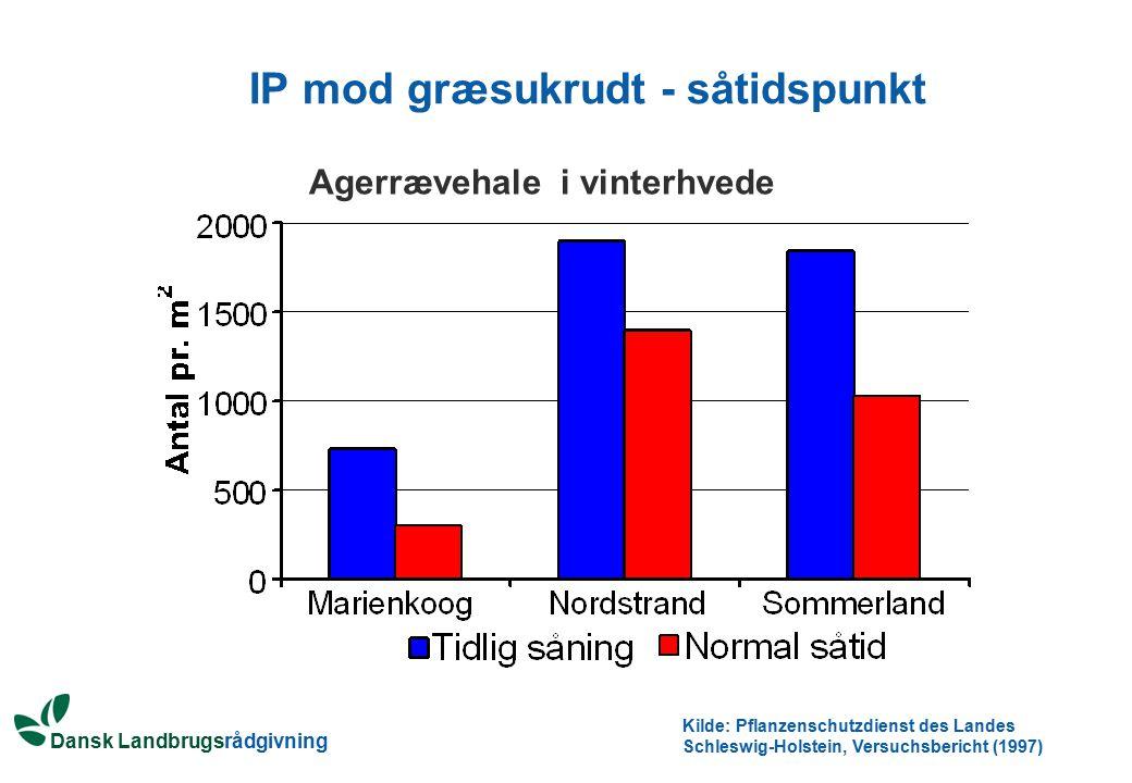 IP mod græsukrudt - såtidspunkt