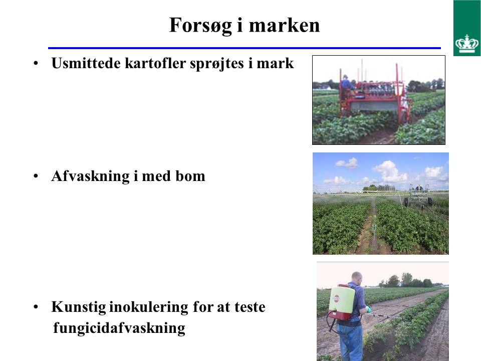 Forsøg i marken Usmittede kartofler sprøjtes i mark