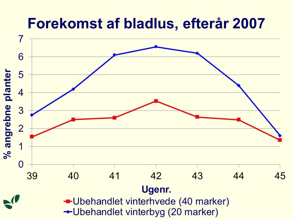 Forekomst af bladlus, efterår 2007