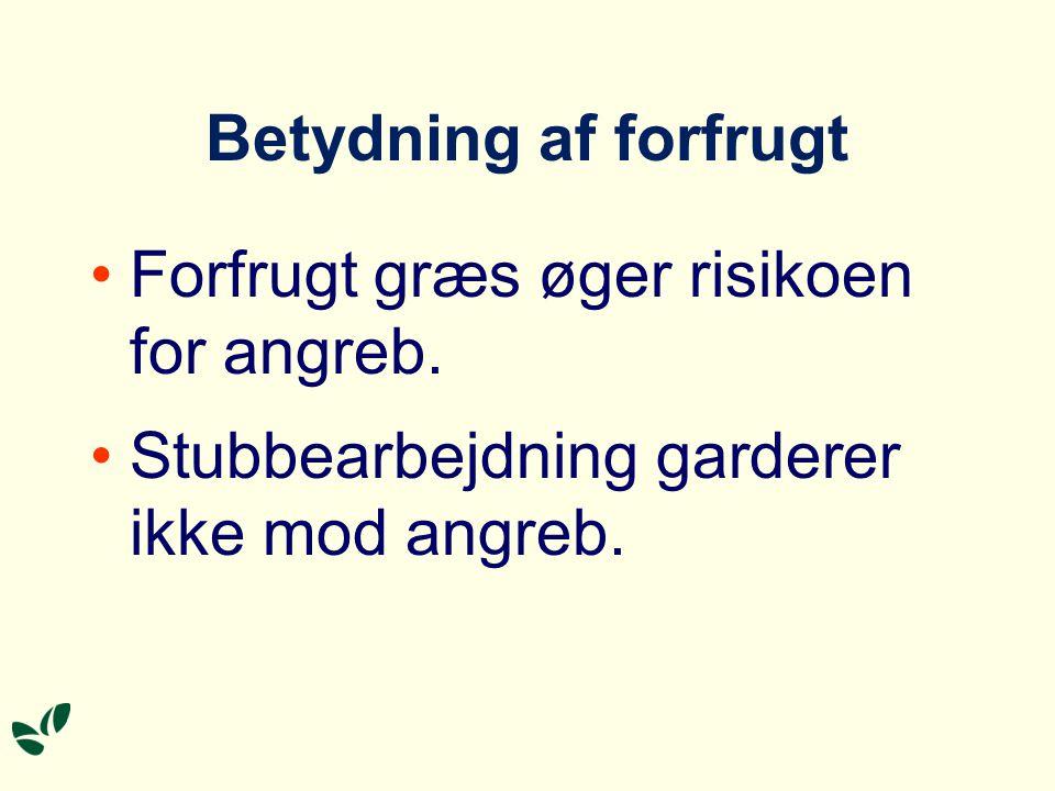 Betydning af forfrugt Forfrugt græs øger risikoen for angreb.