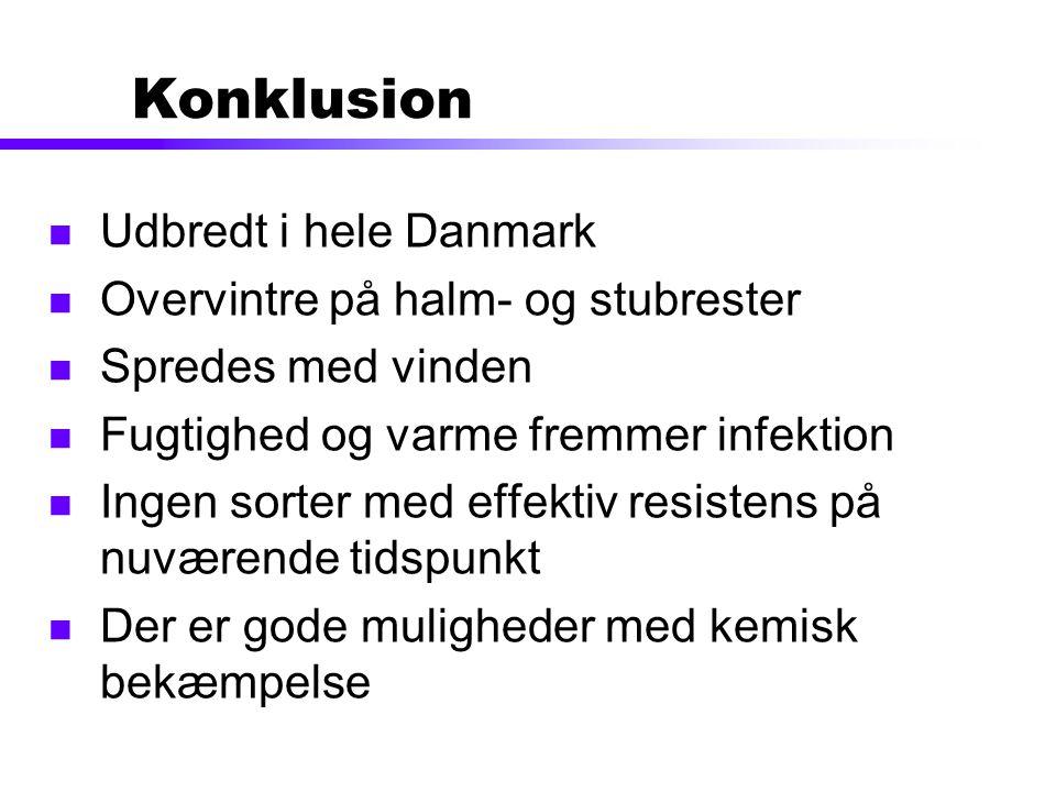 Konklusion Udbredt i hele Danmark Overvintre på halm- og stubrester