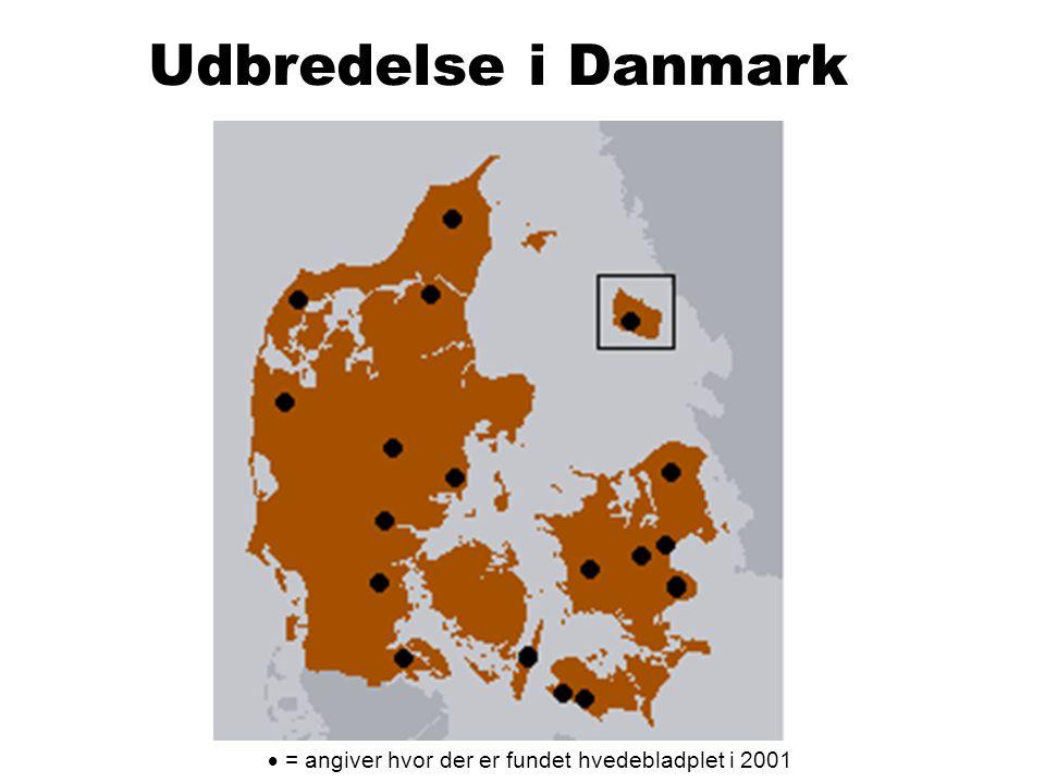 Udbredelse i Danmark  = angiver hvor der er fundet hvedebladplet i 2001