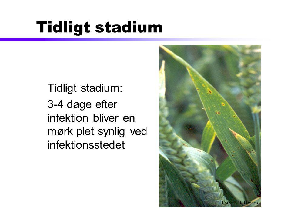 Tidligt stadium Tidligt stadium: