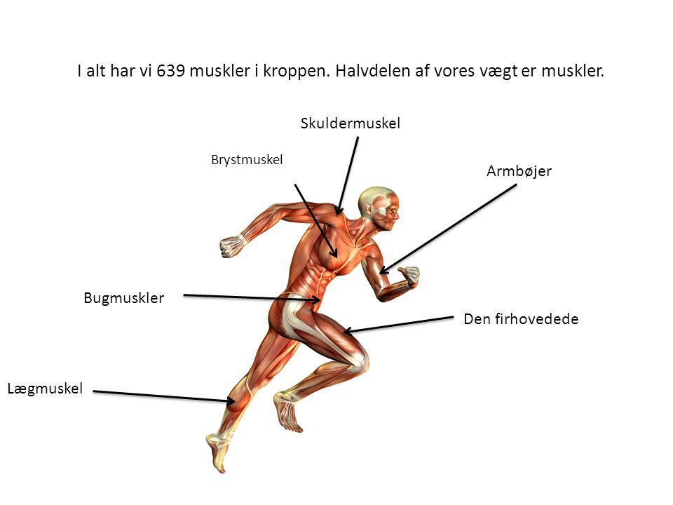 I alt har vi 639 muskler i kroppen. Halvdelen af vores vægt er muskler.