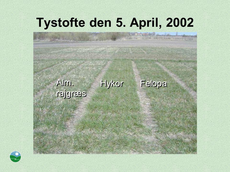 Tystofte den 5. April, 2002 Alm. rajgræs Hykor Felopa