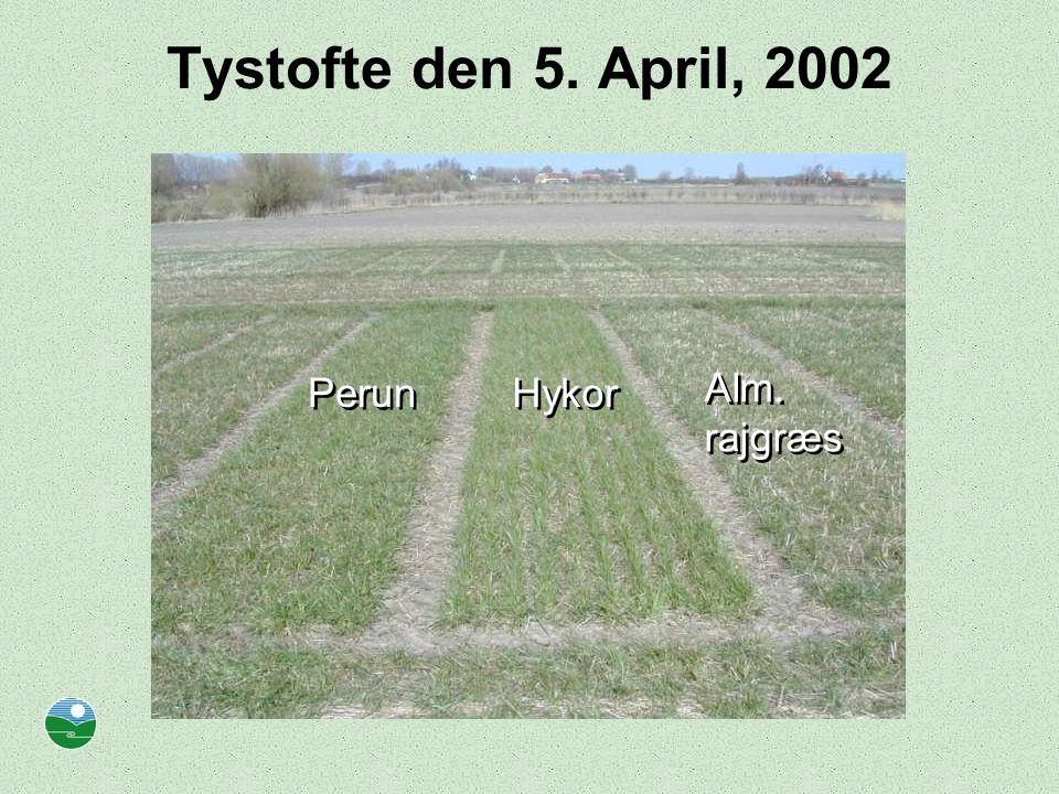 Tystofte den 5. April, 2002 Perun Hykor Alm. rajgræs