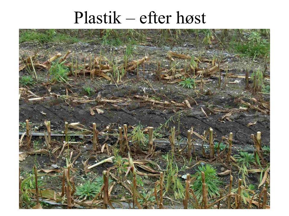 Plastik – efter høst