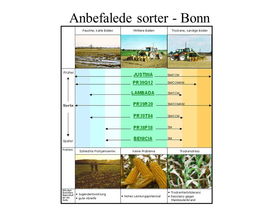 Anbefalede sorter - Bonn