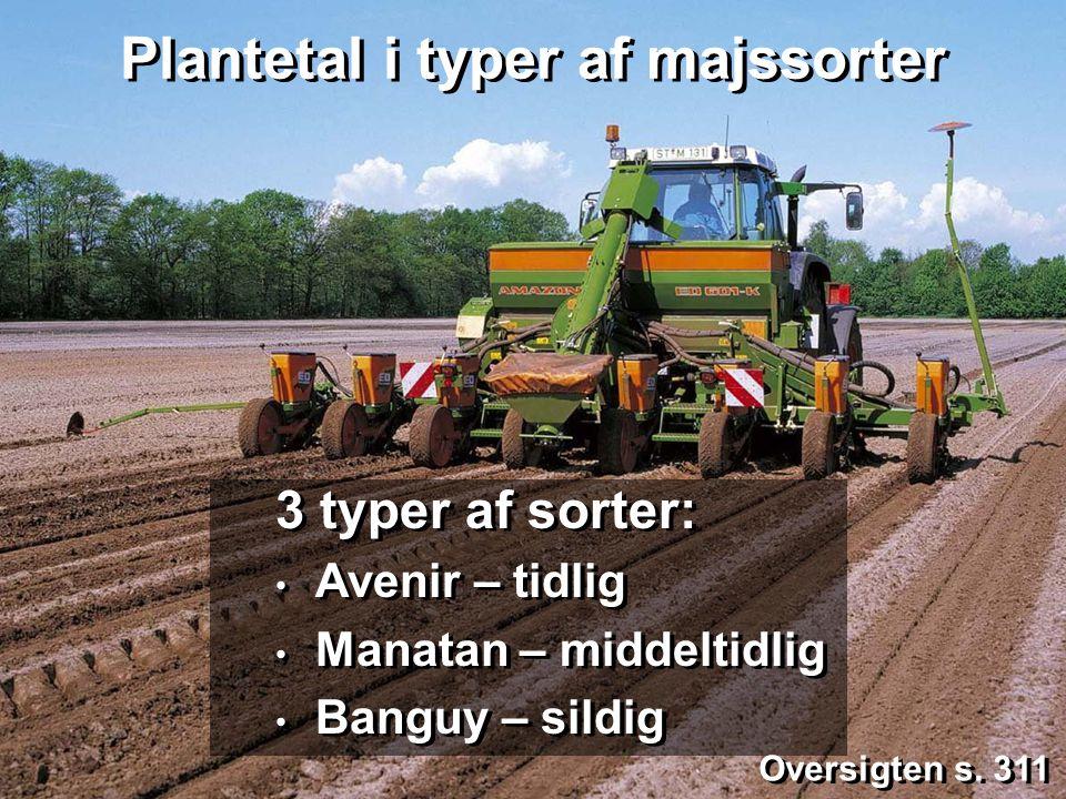 Plantetal i typer af majssorter
