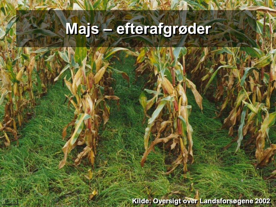 Majs – efterafgrøder Kilde: Oversigt over Landsforsøgene 2002