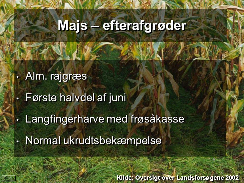 Majs – efterafgrøder Alm. rajgræs Første halvdel af juni
