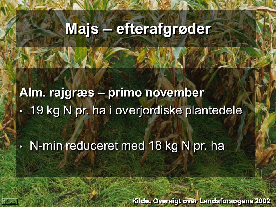 Majs – efterafgrøder Alm. rajgræs – primo november