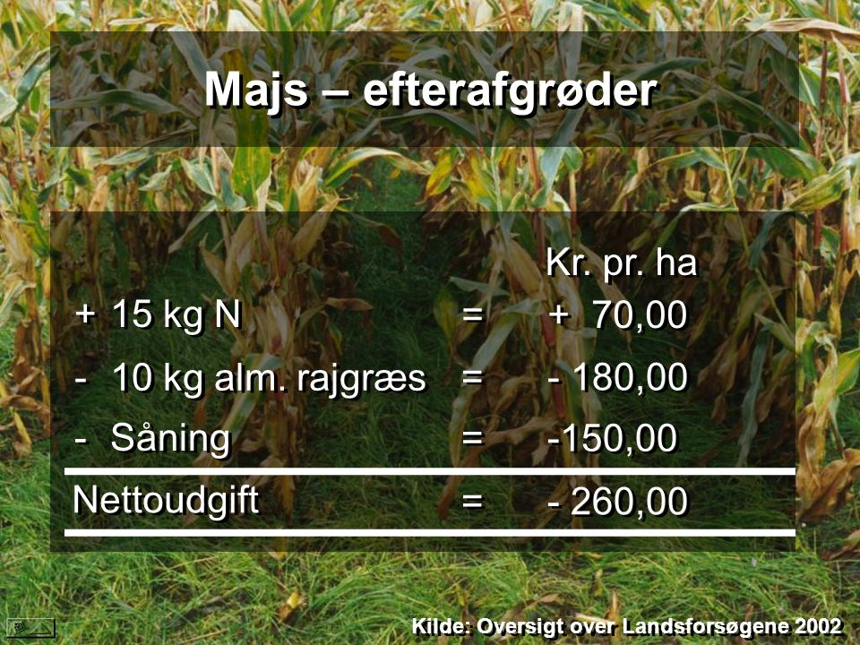 Majs – efterafgrøder + 15 kg N Kr. pr. ha = + 70,00