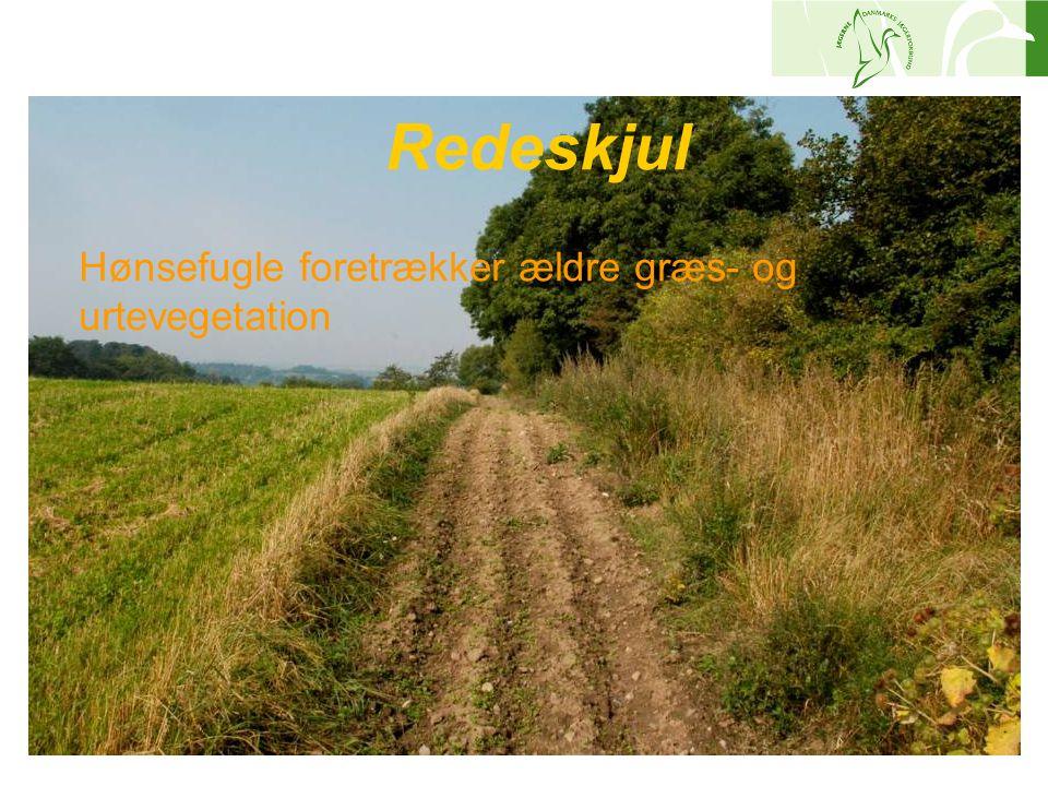 Redeskjul Hønsefugle foretrækker ældre græs- og urtevegetation