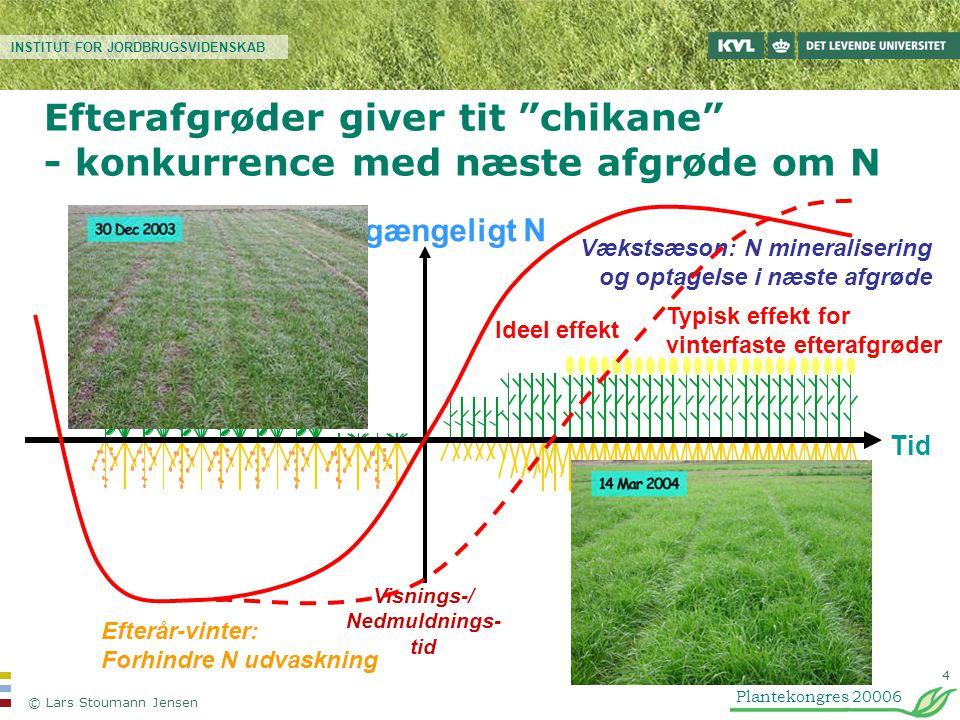 Efterafgrøder giver tit chikane - konkurrence med næste afgrøde om N