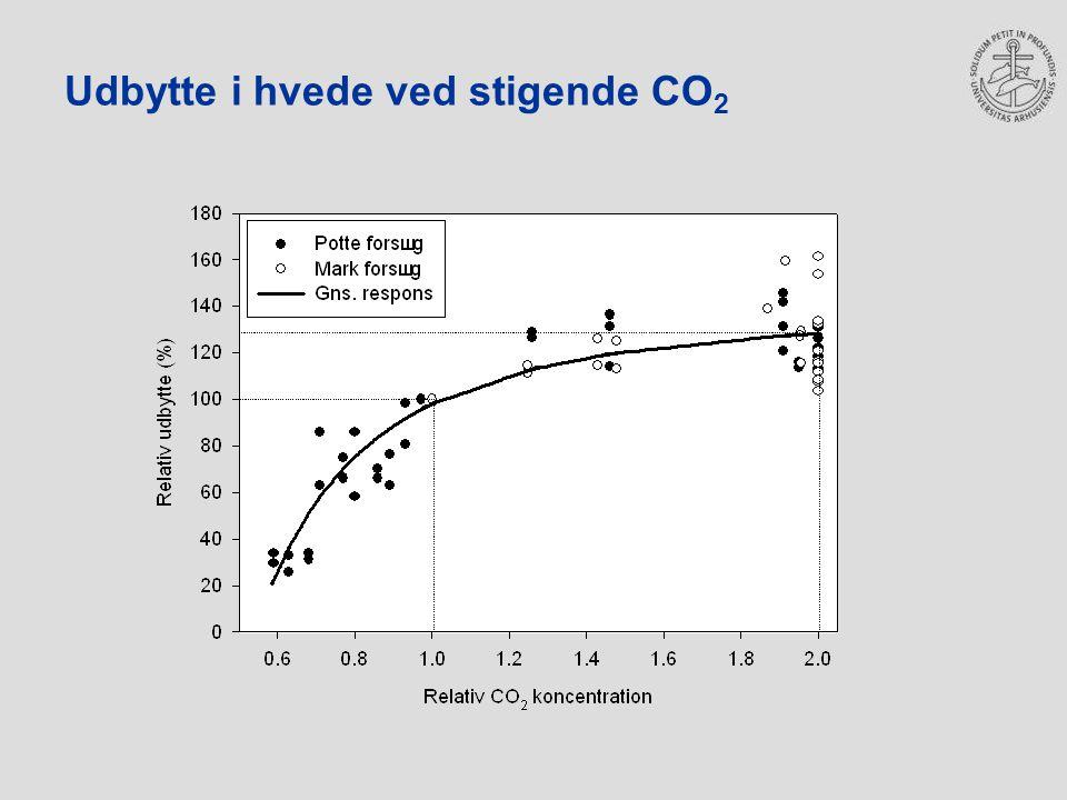 Udbytte i hvede ved stigende CO2