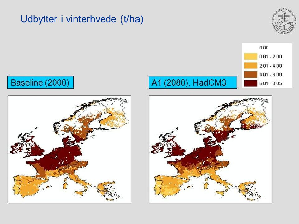 Udbytter i vinterhvede (t/ha)