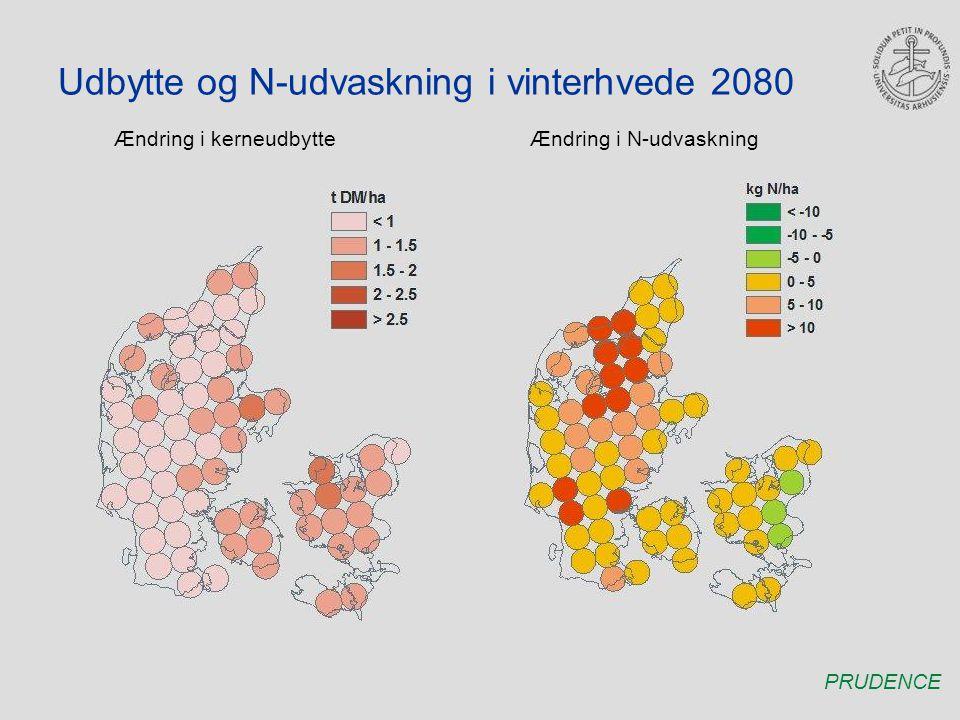 Udbytte og N-udvaskning i vinterhvede 2080