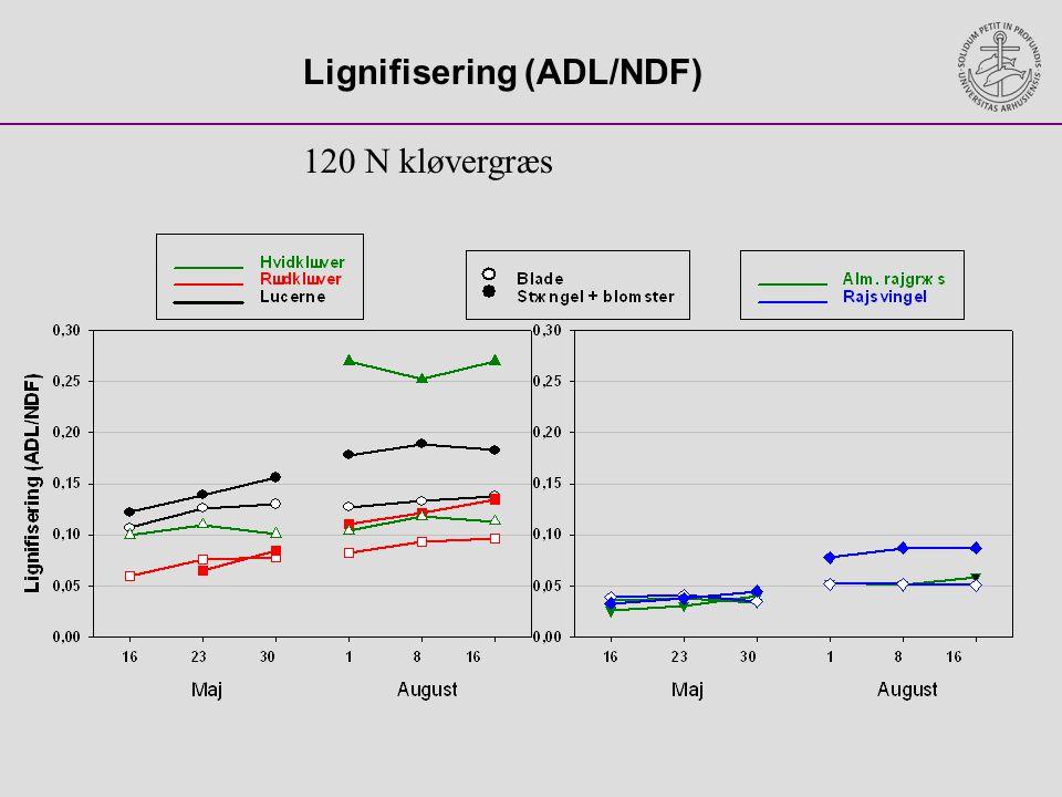 Lignifisering (ADL/NDF)