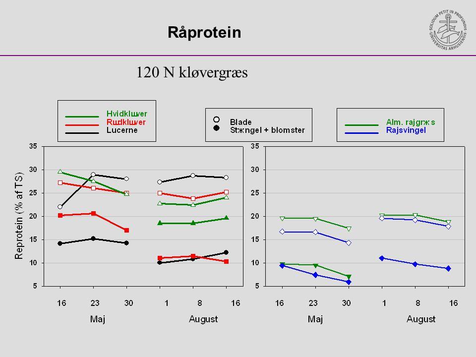 Råprotein 120 N kløvergræs