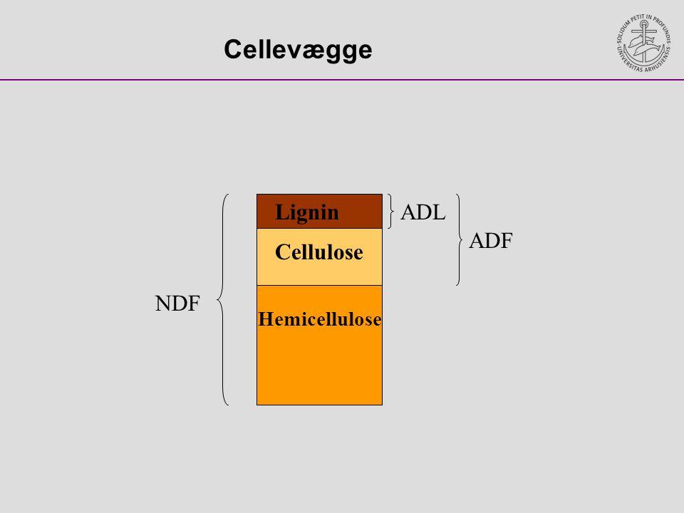 Cellevægge Lignin ADL ADF Cellulose NDF Hemicellulose