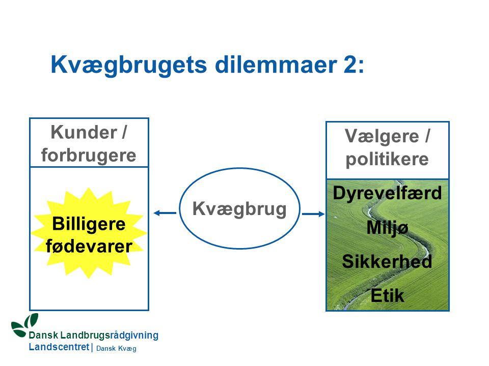 Kvægbrugets dilemmaer 2: